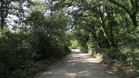 antico bosco alberobello